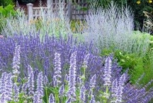 garden inspiration / my passion for gardening and beautiful gardens goes deep.........