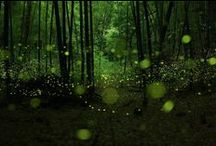 illuminating the great outdoors / i love playing outside.....even at night under the glow of fireflies.