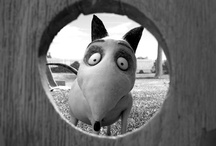 Frankenweenie / Now Available on Disney Blu-ray Combo Pack & HD Digital / by Walt Disney Studios