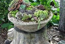 My garden oasis / by Deborah Baksh