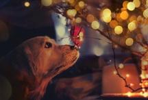 Christmas / by Lara Nitta
