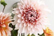 FLOWERSTORIES / Flowers / by Willemijn ter Hart-Koopal