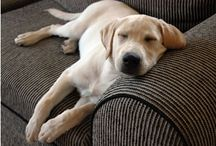 50% Doggie Household / by Lara Nitta
