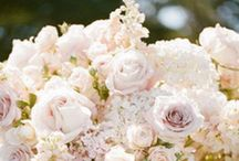 Wedding Flowers / by J Leyendecker