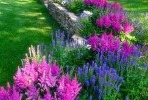 Plant Landscape Ideas / Looking for ideas to revamp your backyard? Front yard? Wherever your garden grows, seek gardening and landscape inspiration here to bring new life to your space.