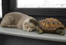 Animals with animals