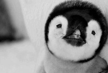 Cute animals <3 / by Caitlin Matchett