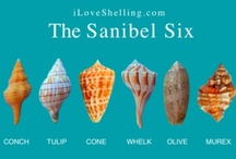 I Love Sanibel & Captiva! / The beautiful shells and sights of Sanibel Island Florida (including sister island Captiva and the smaller outter islands) / by Allyson Norris