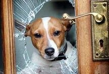 """Must Love Dogs / We're not """"The Chronicle of the Dog,"""" but canines are a close second."""