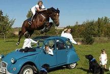Well Fancy That / Weird, wild and awwwwdorable horse photos.