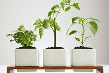 OUTDOOR : Mini Herb Garden Ideas
