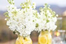 || Flowers || / by Jennifer Stafford