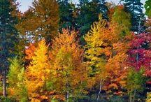 Cozy Autumn / Autumn, fall foliage, pumpkins