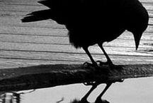 blackbird singin' in the dead of night...