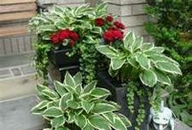 Jardinería / Pequeños detalles de jardineria.
