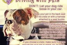 Driving in Cars with Dogs / #Dogs #Driving #Tips