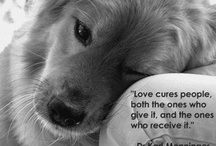 Dog <3 and other animals