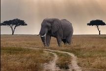 Elephants never forget... / by Hope Elizabeth