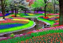 Flora, Fauna & Fungi / Beautiful Flowers, Trees, Gardens, Fungus & Forest Creatures