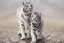 Wild Cats, Big And Small / Exotic Wild Cats from all over the World, and their Little Ones.