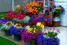 Container Gardens / Indoors, Outdoors, Containers, Greenhouses, and Hydroponic Set-ups. Gardening when there is no ground space available.
