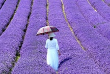 Purple Visions