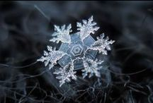 snow such thing / by Petra Zarre
