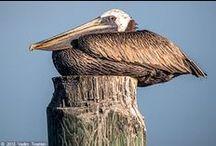 Galveston / by Joye Roll