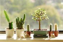 Plants / by Kate Nguyen