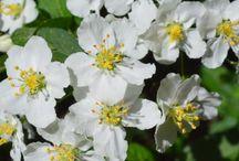 Puutarha - Garden / Kukkia puutarhassamme - Flowers in our garden