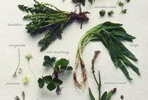 Botanical ~ herb gathering & ephemera / vintage in nature~ / by Sarah Brooks ~ Passionately Pinteresting