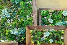 Plantas / by VerdePimienta