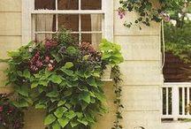 Gardening .balcony