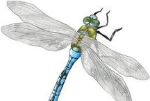 Darling Dragonflies / I have adored dragonflies ever since playing with my Grandma's brooch as a toddler. They symbolise good things for me. Can you imagine how thrilled I was to see 3 real ones on my first date with my sweetie?