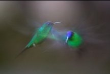 Hummingbirds / One of nature's many amazing sights. / by Write Away For You calligraphy