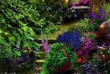 In The Garden / Flowers of beauty / by Tammy LaVonne Giesbrecht