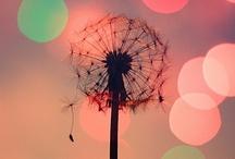 Flowers / by Amanda Aasland