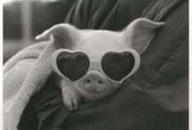 Halo Loves Pigs / Pigs of all kindz / by Tammy LaVonne Giesbrecht