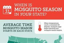 Mosquito Facts & Information / We all hate mosquitoes, but you know what they say -- knowledge is power! Educate yourself on everything from where and how mosquitoes breed, how mosquitoes are attracted to you, and how to prevent a mosquito infestation in your backyard!