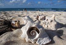 Beachy / Beach Living / Beach Wear / by Tammy LaVonne Giesbrecht
