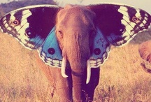 Elephants for Rose / Elephants / by Tammy LaVonne Giesbrecht