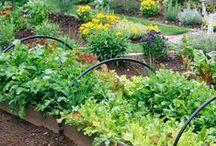Celebrate Back Yard Gardens! / Celebrate ideas for creating your own back yard garden!