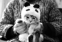 Cats, Pandas, etc.