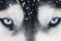 Jake: Wolves / by Renee Hall