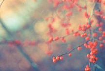Photography - Bokeh / by CRYgraphics