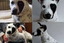 Kodiak's Wish List For Dogs & Pet Lovers