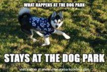Dog Behavior & Training