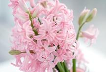 Arrange It: Spring / Spring flower arrangement ideas / by Anne Carter