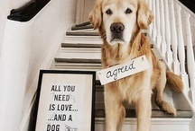 (Four Legged Furry) Friends / Most of the time I like animals more than people / by Andrea Jarvis
