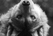 The puriy of Animals